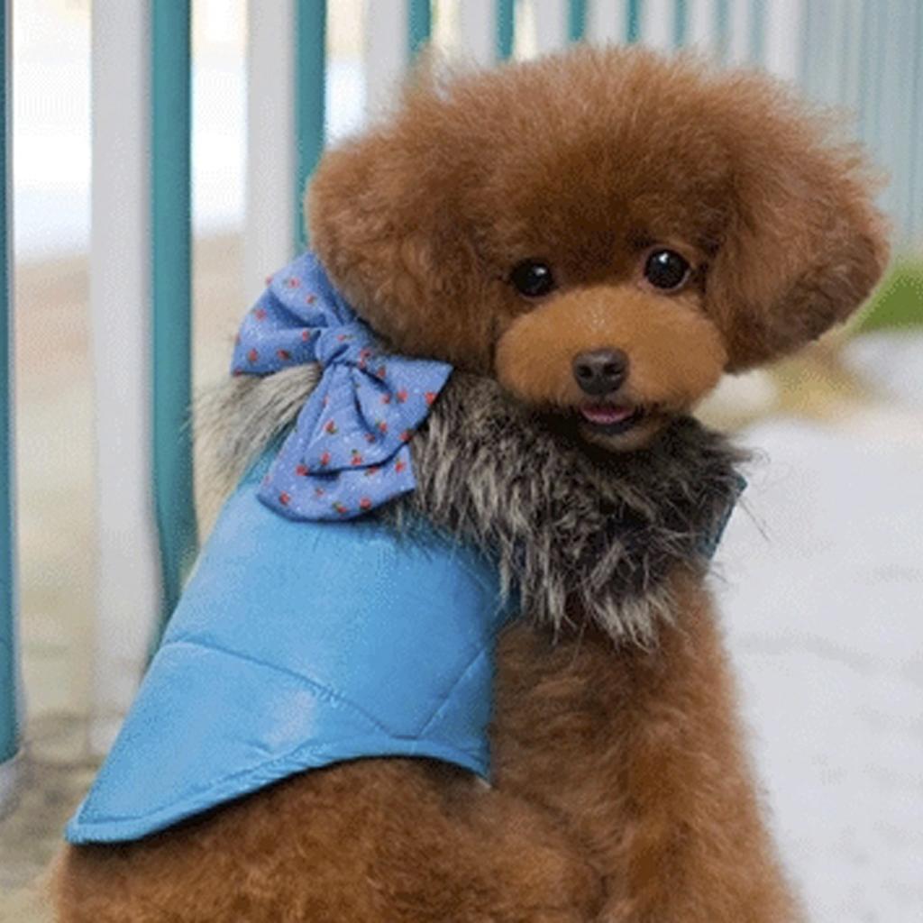 Luxury Pet Dog Winter Warm Coat Jacket Vest with Bowknot Blue S