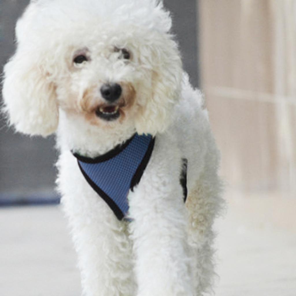 Pet Dog Puppy Soft Mesh Adjustable Harness Clothes Size XL - Blue